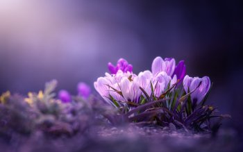 HD Wallpaper | Background Image ID:1004624
