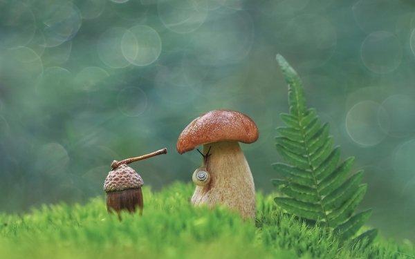 Earth Mushroom Nature Bokeh Snail HD Wallpaper   Background Image