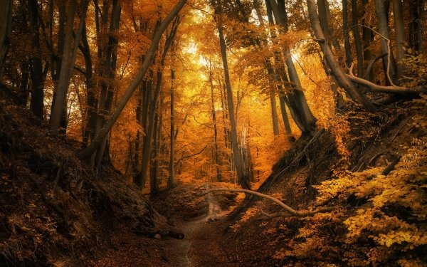 Earth Fall Forest Tree Poland Path Nature Foliage HD Wallpaper | Background Image