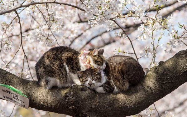 Animal Cat Cats Cuddle Sleeping Cute HD Wallpaper | Background Image