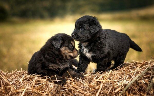 Animal Puppy Dogs Dog Pet Baby Animal HD Wallpaper | Background Image