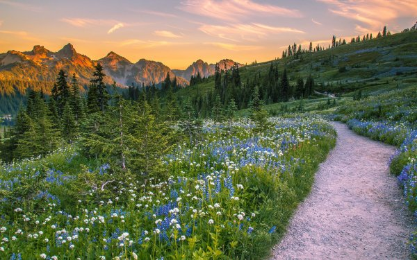 Earth Mount Rainier Mountains National Park Landscape Flower Mountain USA Path Meadow Forest HD Wallpaper | Background Image