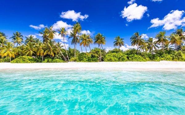 Tierra/Naturaleza Océano Playa Palmera Seychelles Fondo de pantalla HD | Fondo de Escritorio
