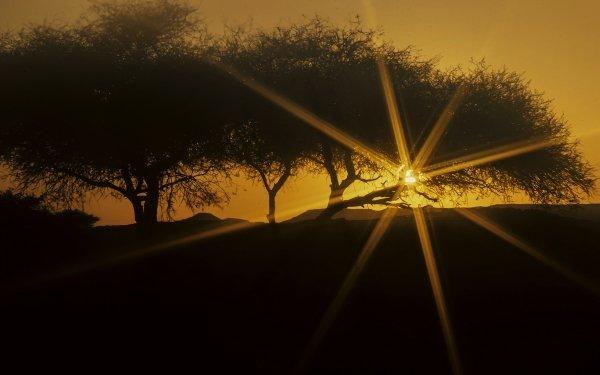 Earth Sunset Tree Desert Sahara Algeria HD Wallpaper | Background Image