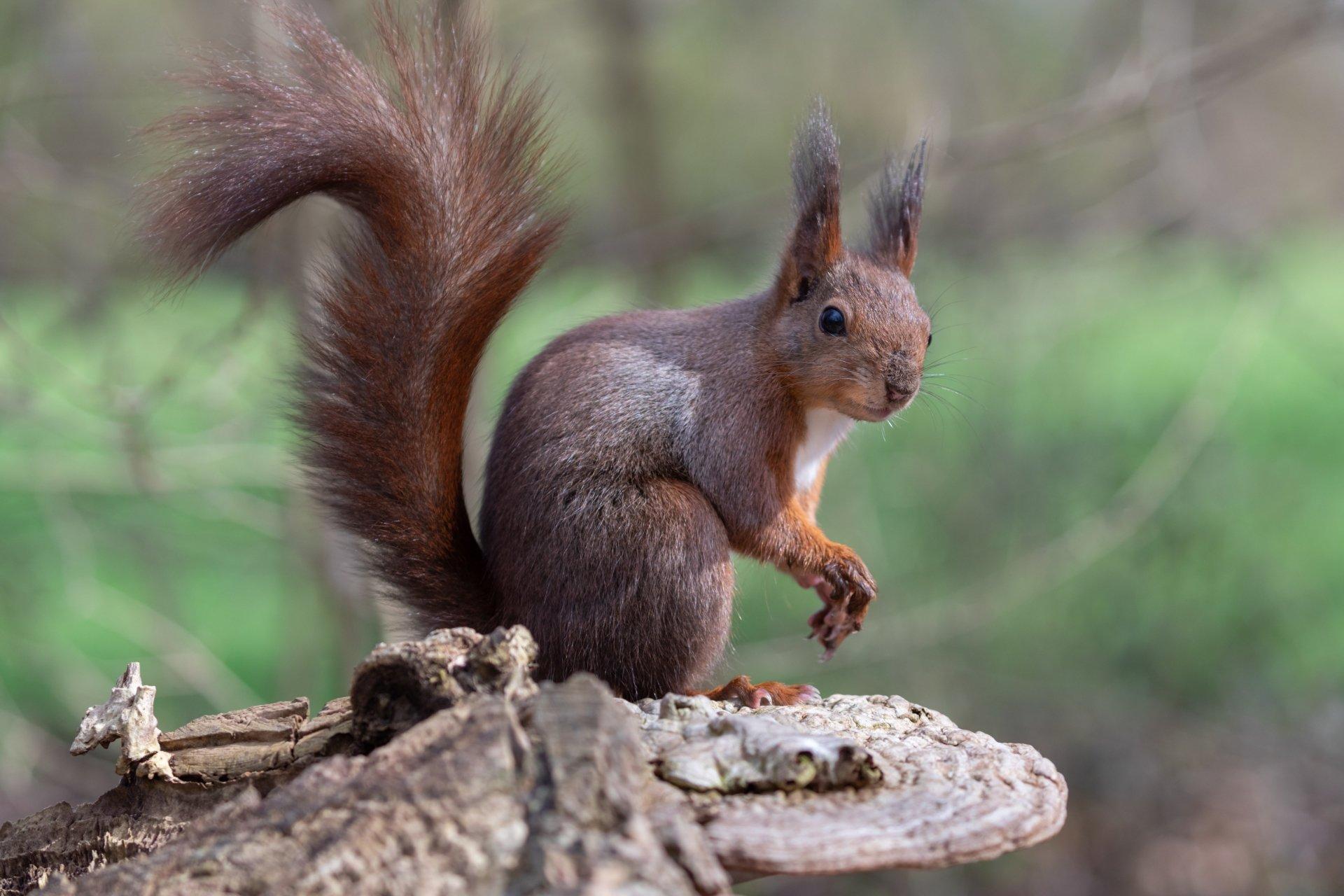 eichhörnchen 5k retina ultra hd wallpaper   hintergrund