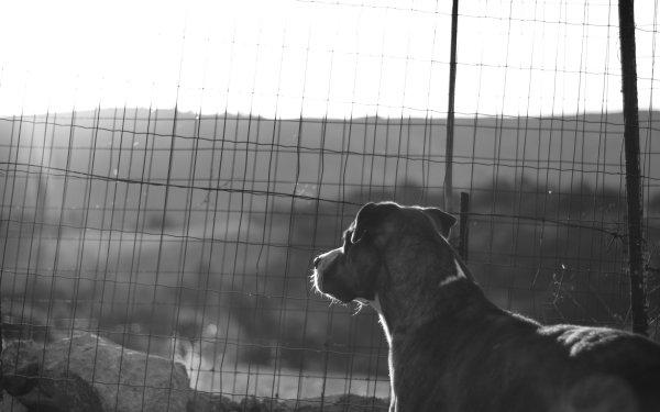 Animal Dog Dogs Grid Black & White HD Wallpaper | Background Image
