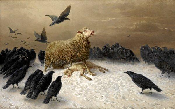 Dark Death Crow Sheep Bird HD Wallpaper | Background Image