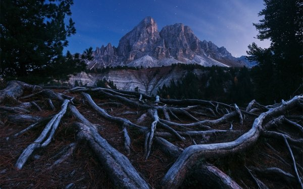 Earth Tree Root Forest Mountain Night Roots Starry Sky HD Wallpaper | Background Image