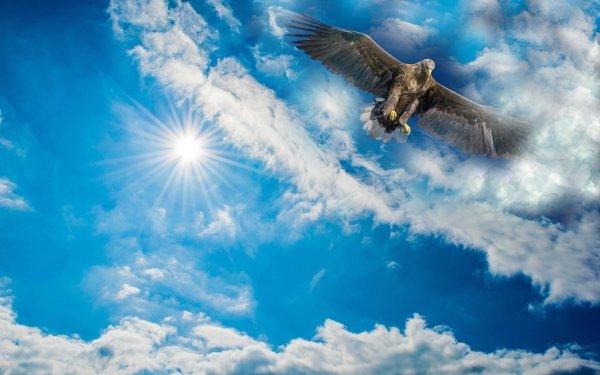 Animal Eagle Birds Eagles Sky Cloud Bird Wings HD Wallpaper | Background Image