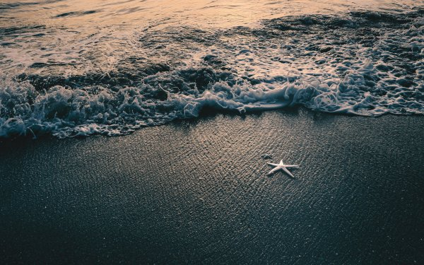 Earth Beach Sand Water Starfish HD Wallpaper   Background Image