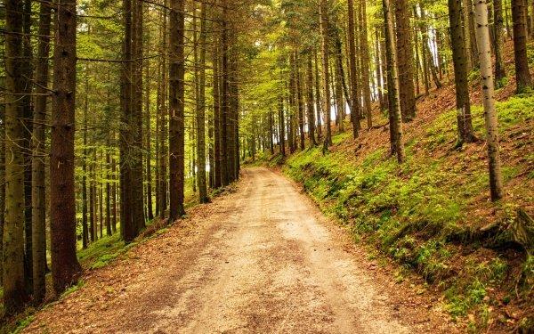 Tierra/Naturaleza Camino Bosque Árbol Fondo de pantalla HD   Fondo de Escritorio