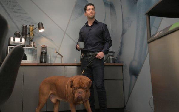 TV Show Turner & Hooch Dogue de Bordeaux Josh Peck HD Wallpaper | Background Image