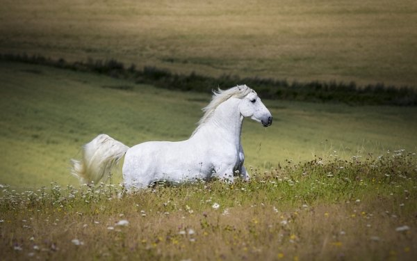 Animal Horse HD Wallpaper | Background Image