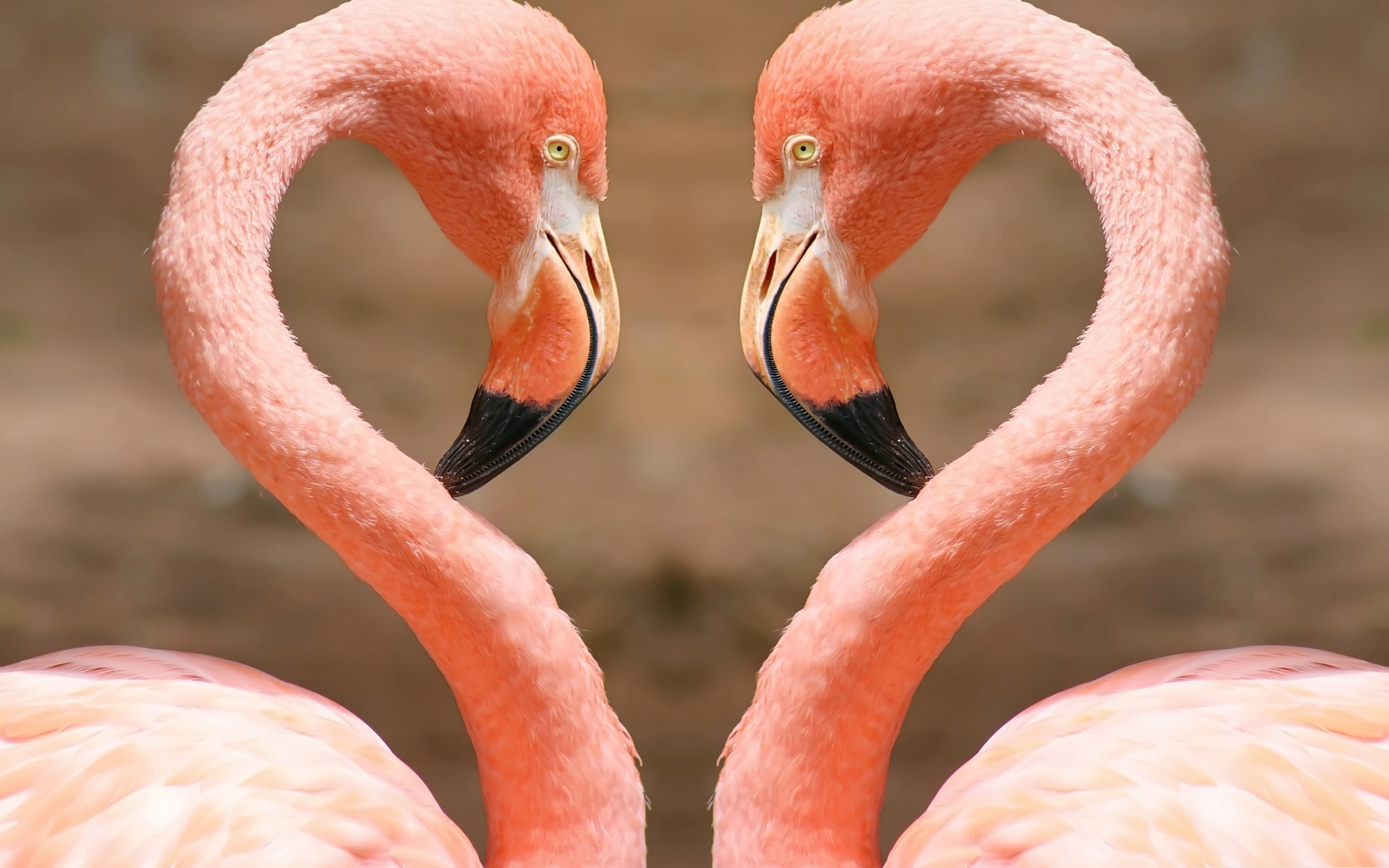 ap language pink flamingo essay Ap language rhetorical analysis essay - 552 wordsap language the analysis of rocky horror picture show and pink flamingos essay the plastic pink flamingo ap.