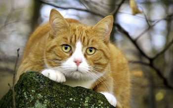 Animal - Cat Wallpapers and Backgrounds ID : 284909