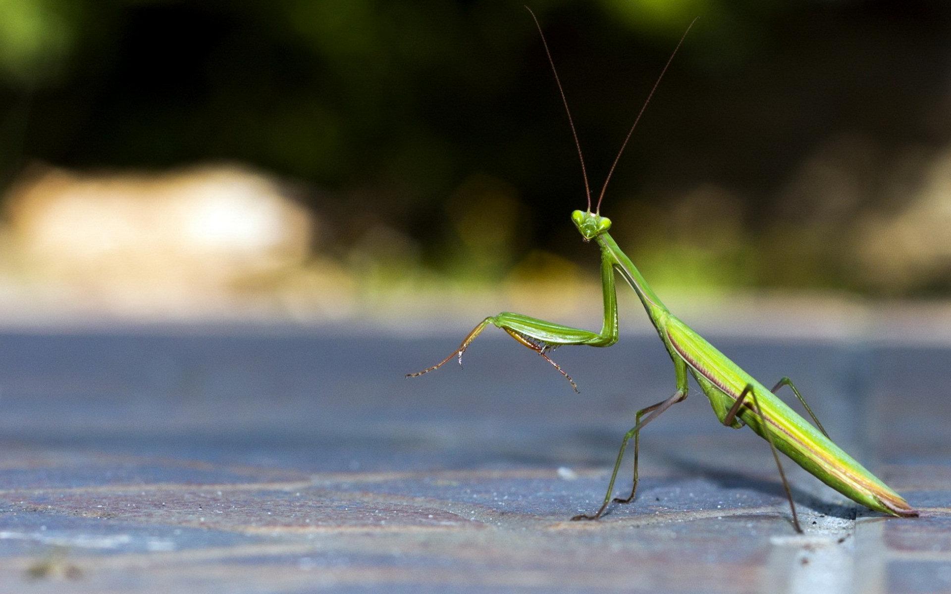 Quotes About Praying Mantis. QuotesGram