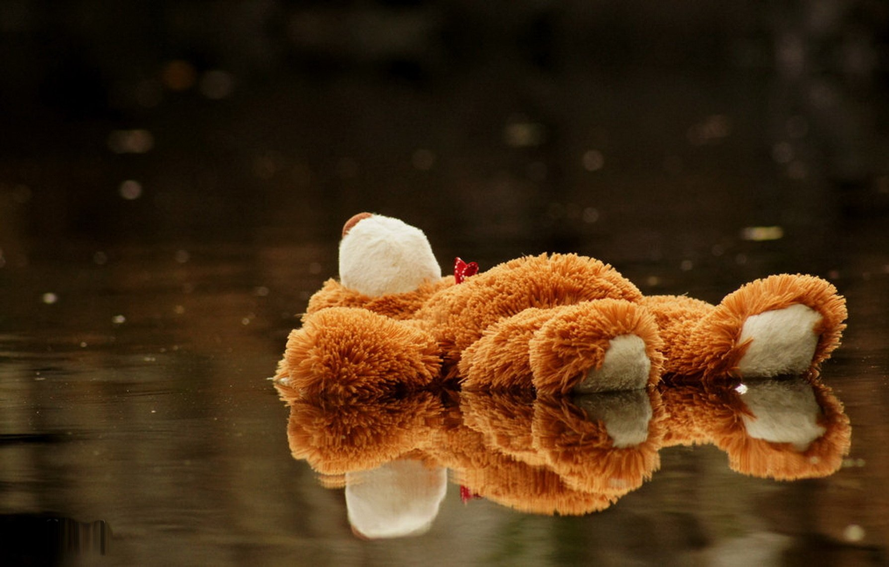242 teddy bear hd wallpapers | background images - wallpaper abyss