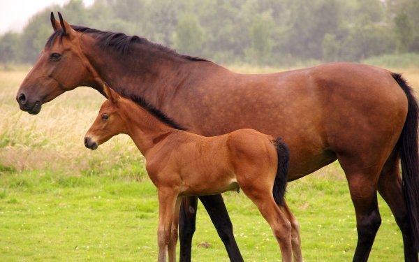 Animal Horse Baby Animal HD Wallpaper | Background Image