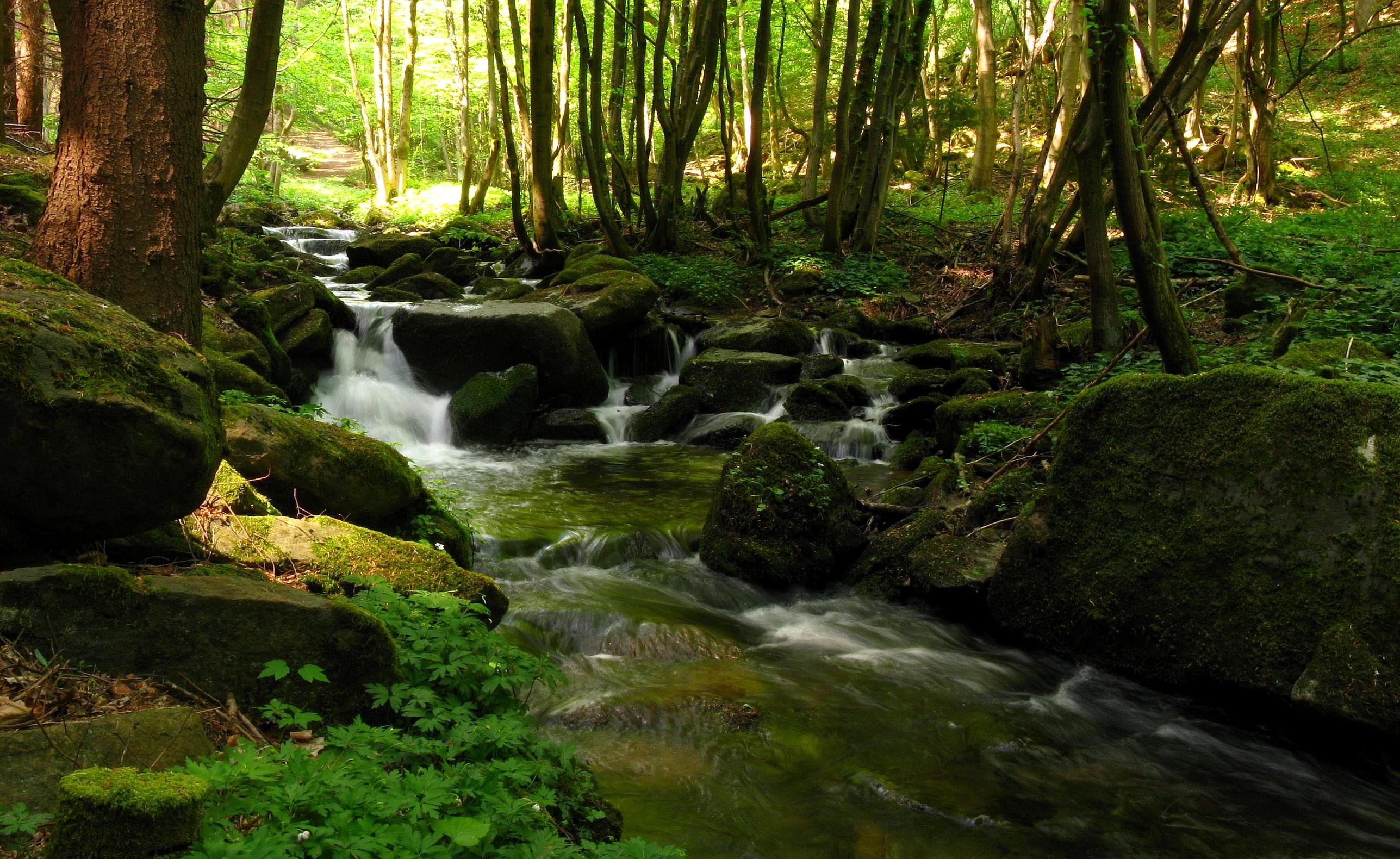 Earth - Waterfall  Stream River Forest Scenic Landscape Wallpaper