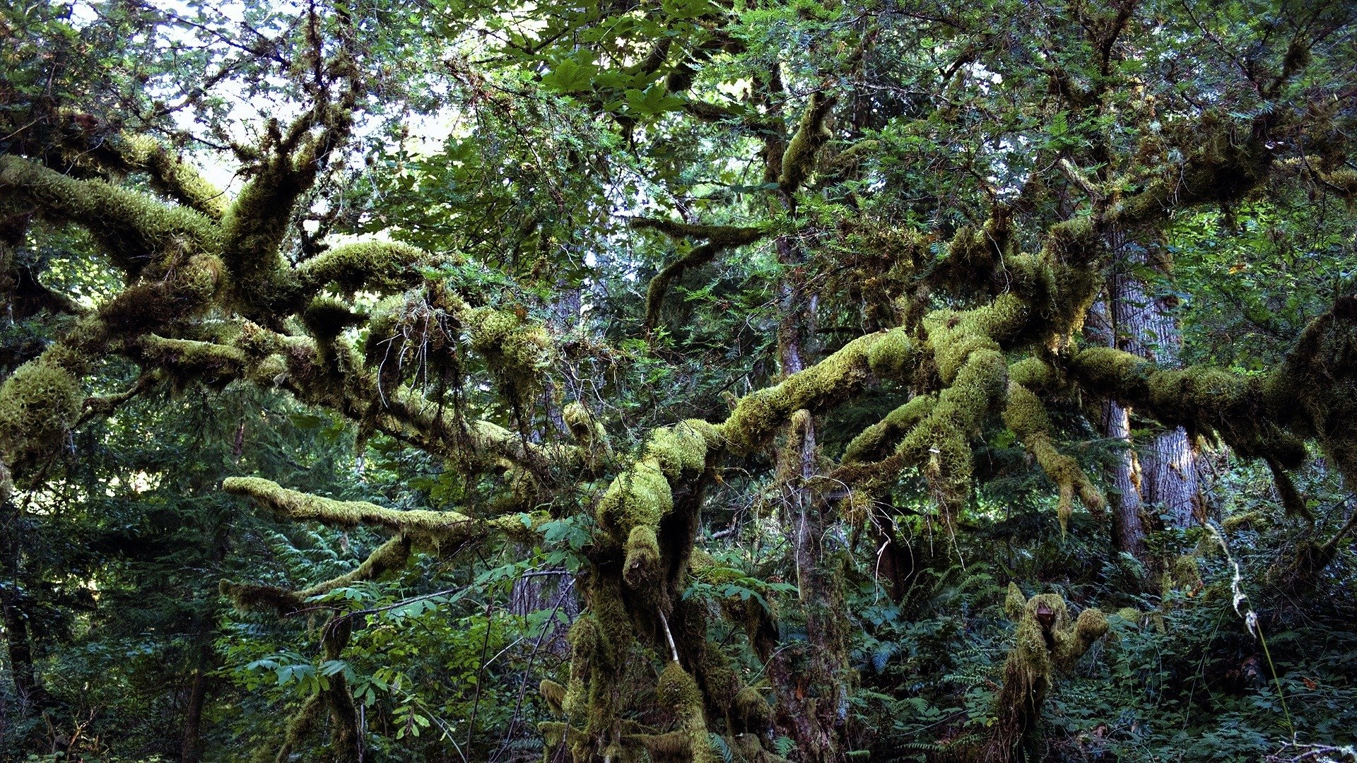 Hd wallpaper jungle - Earth Jungle Forest Wood Wallpaper