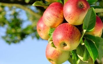 Alimento - Apple Wallpapers and Backgrounds ID : 301997