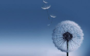 Earth - Dandelion Wallpapers and Backgrounds ID : 302315