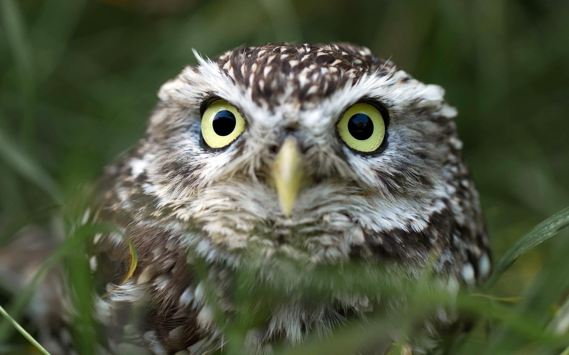 pretty owl wallpaper 1114965