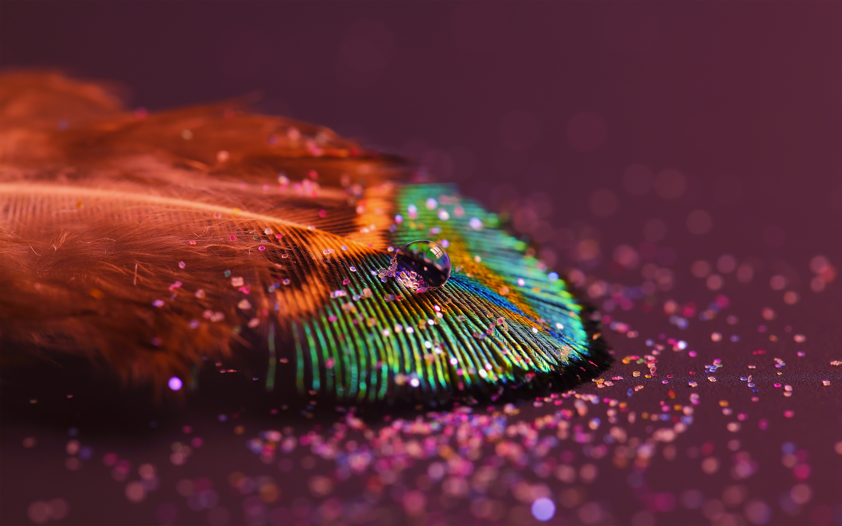 Feather Hd Wallpaper Background Image 2880x1800 Id 307290