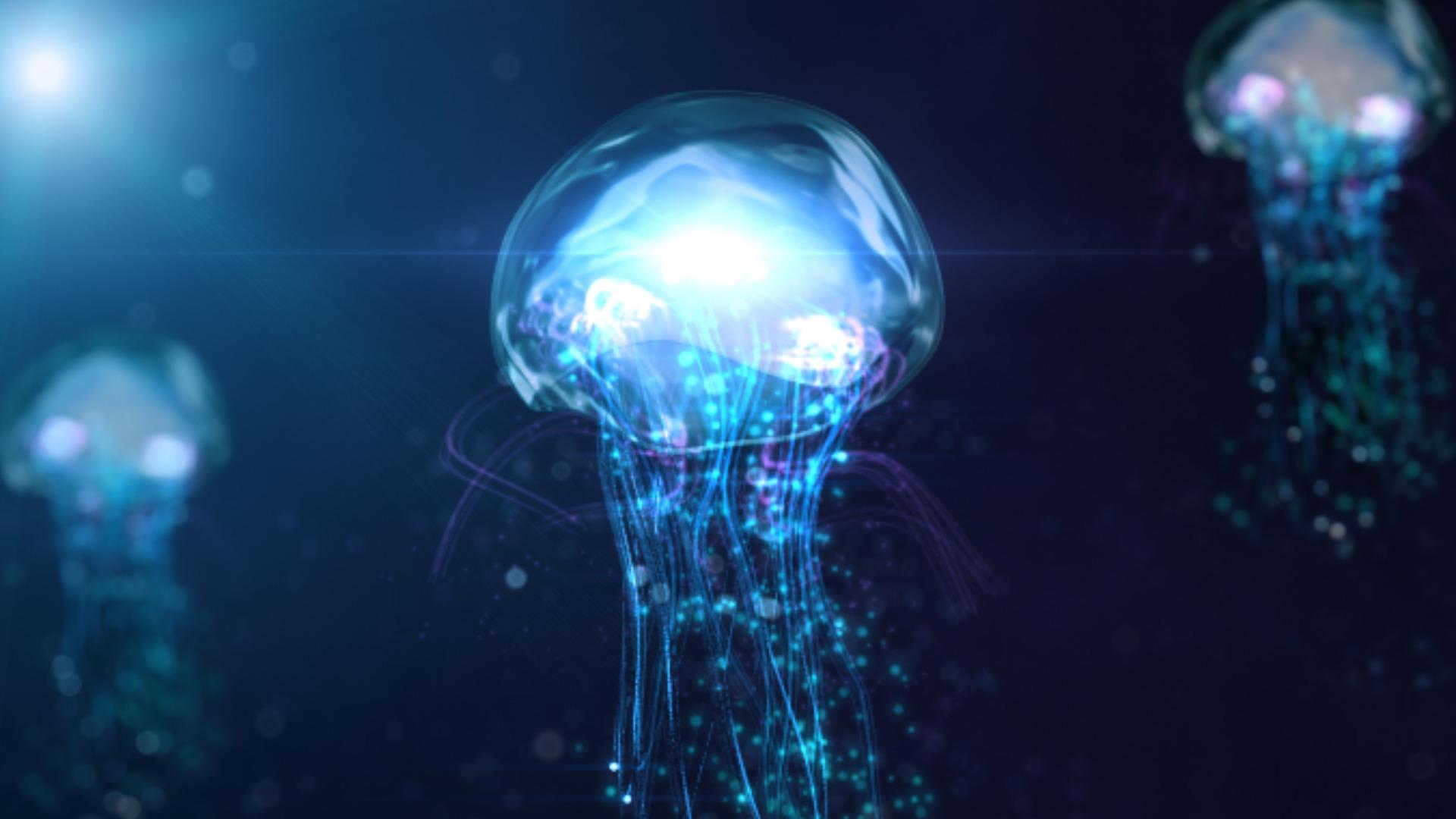 Download jellyfish wallpapers wallpaper electric jellyfish for Jellyfish wallpaper home