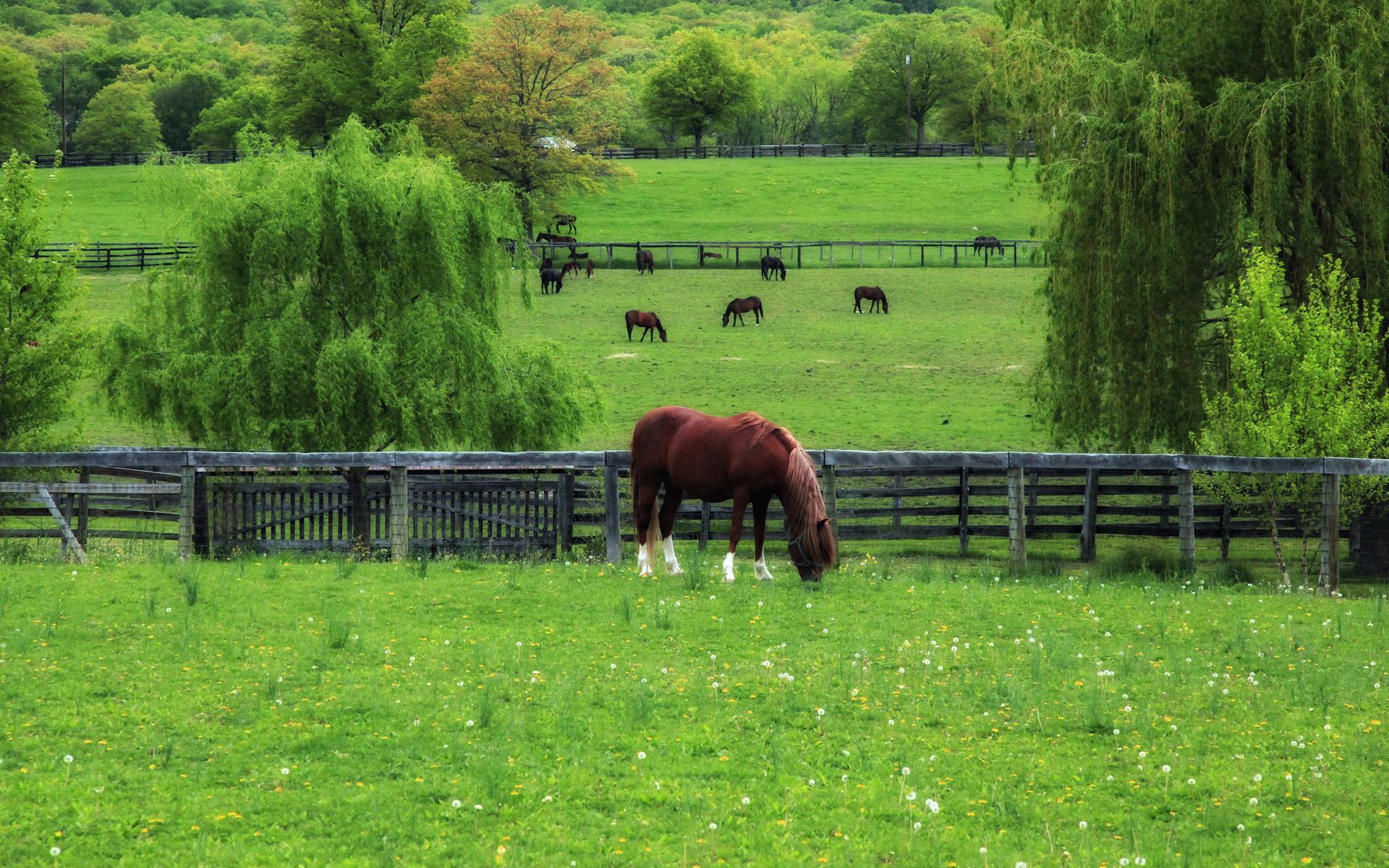 love horses pasture wallpaper - photo #16