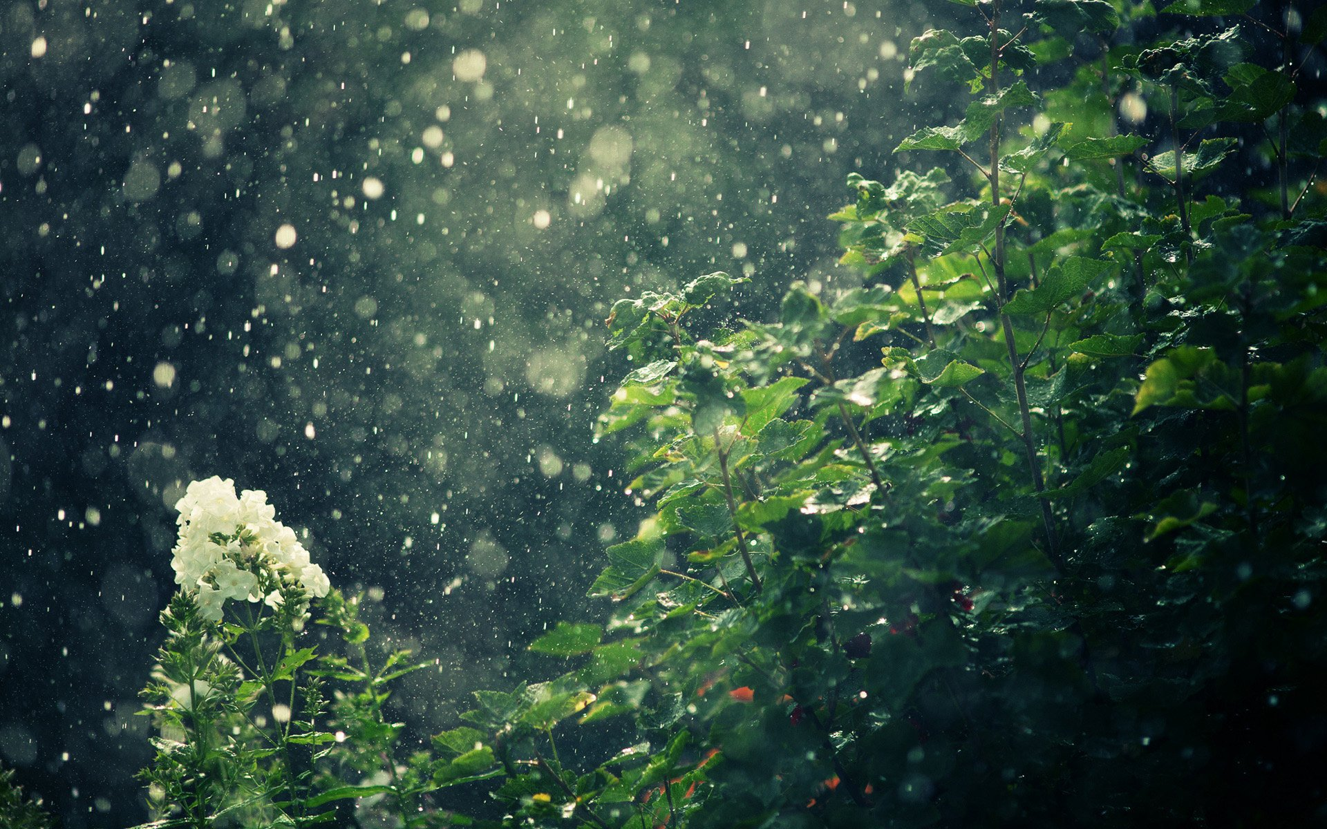 Rain Full Hd Wallpaper And Background Image 1920x1200