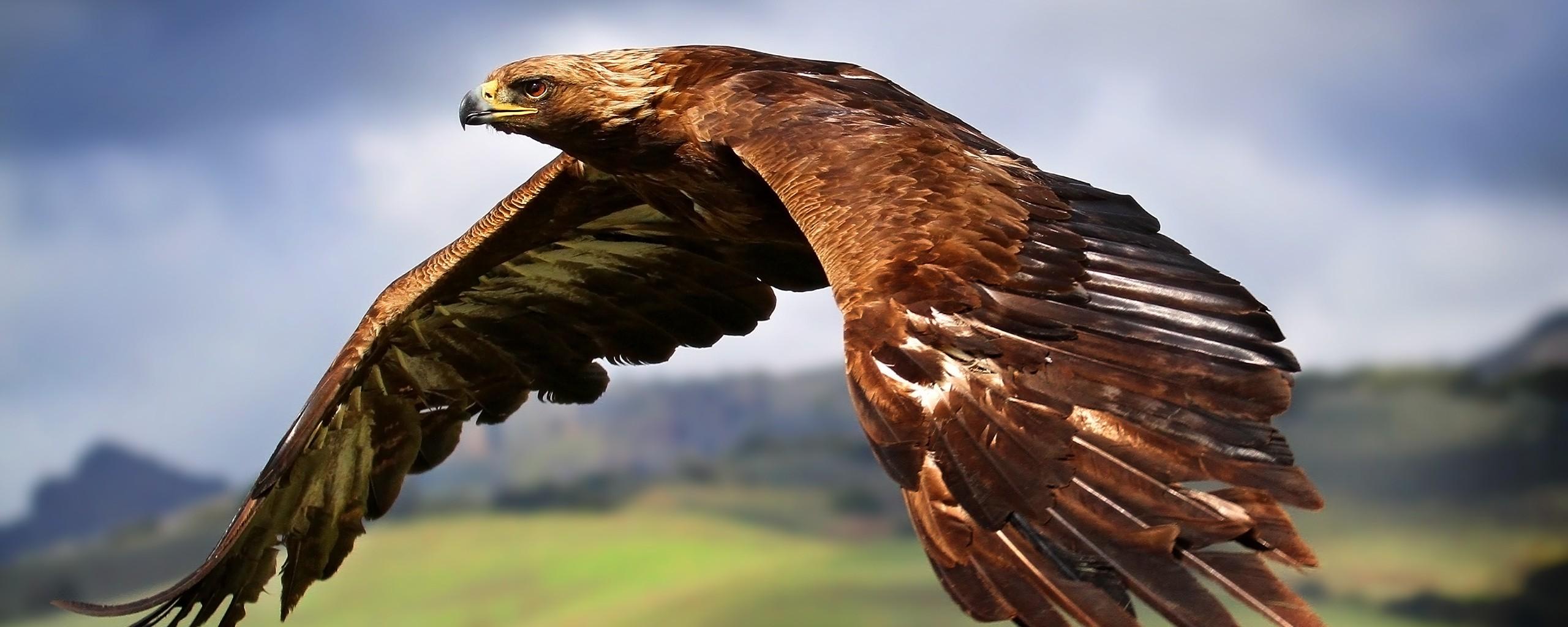Орел над горными хребтами скачать