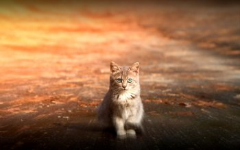 Animal - Cat Wallpapers and Backgrounds ID : 314607