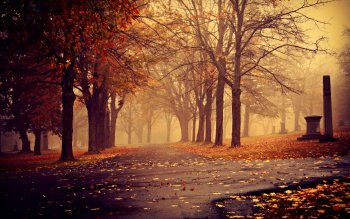 Photography - Autumn Wallpapers and Backgrounds ID : 315357