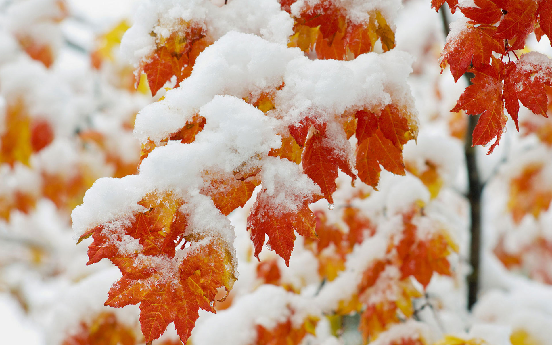 Earth - Fall  Snow Winter Wallpaper
