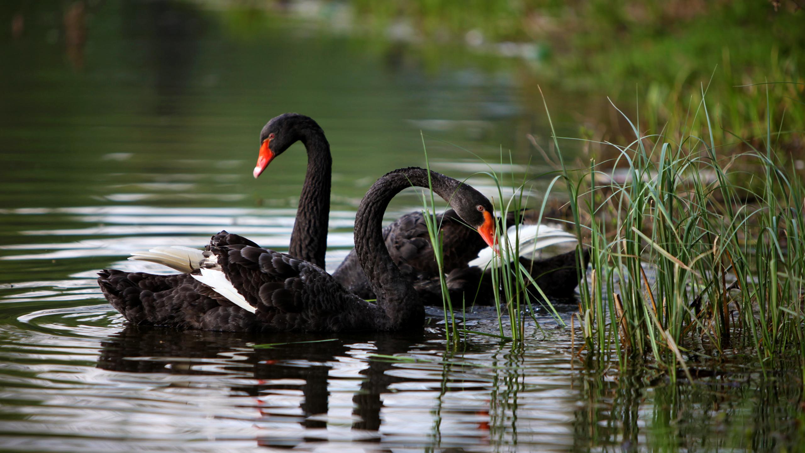 2560x1440 Animal Black...
