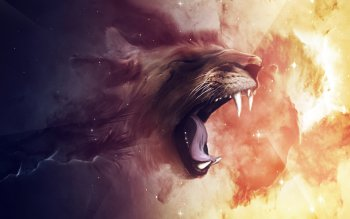 Animal - Lion Wallpapers and Backgrounds ID : 323327