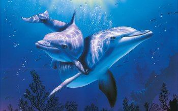207 Dolphin Hd Wallpapers Background Images Wallpaper Abyss