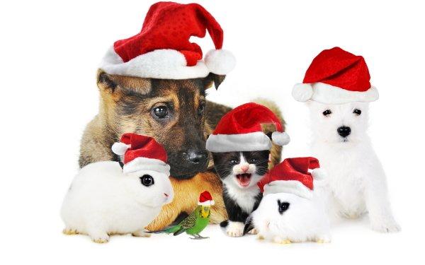 Animal Pets Christmas Santa Hat Dog Kitten Puppy Rabbit HD Wallpaper | Background Image