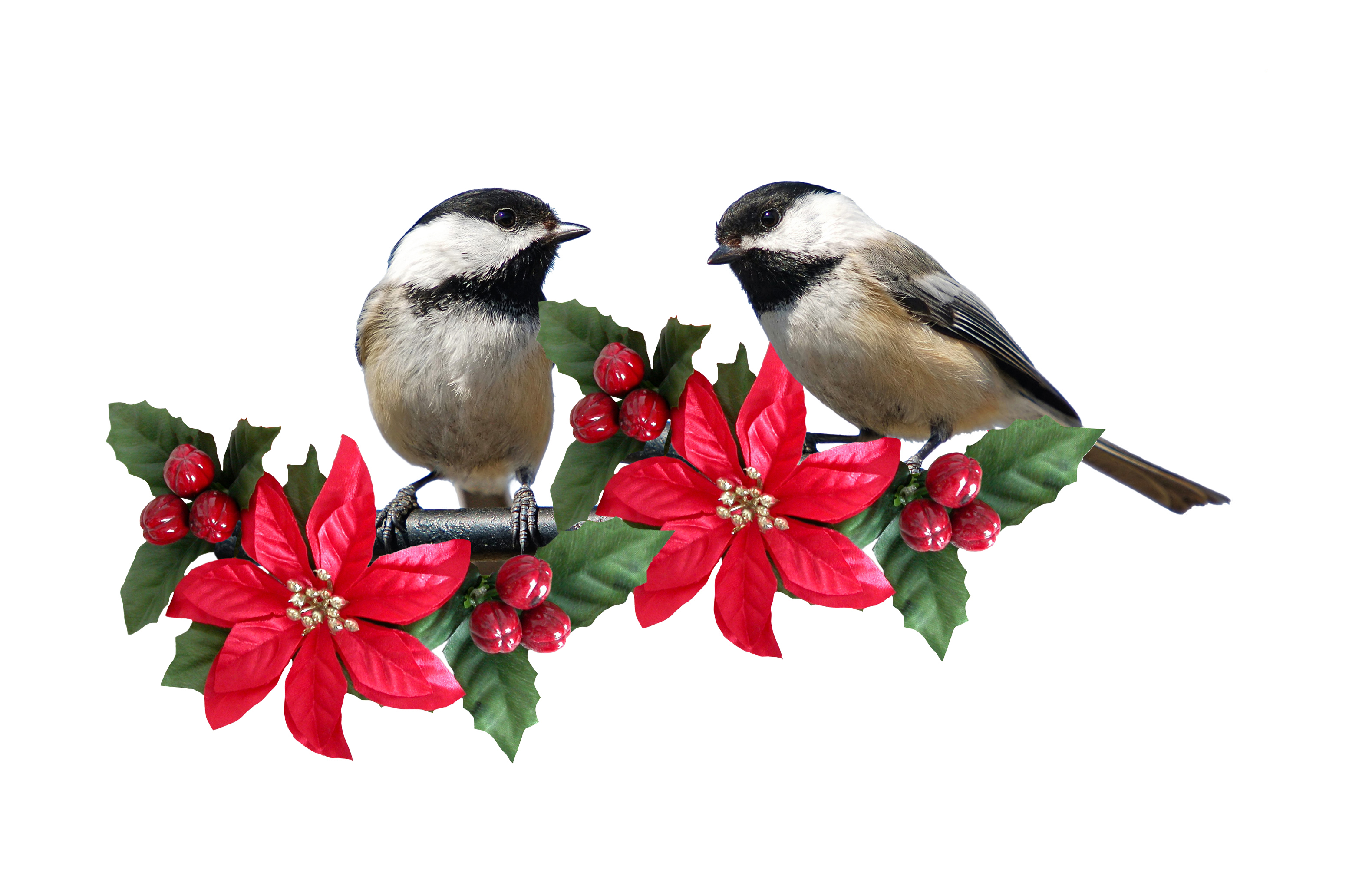Holly And Tit Full Hd Wallpaper And Background Image -3276