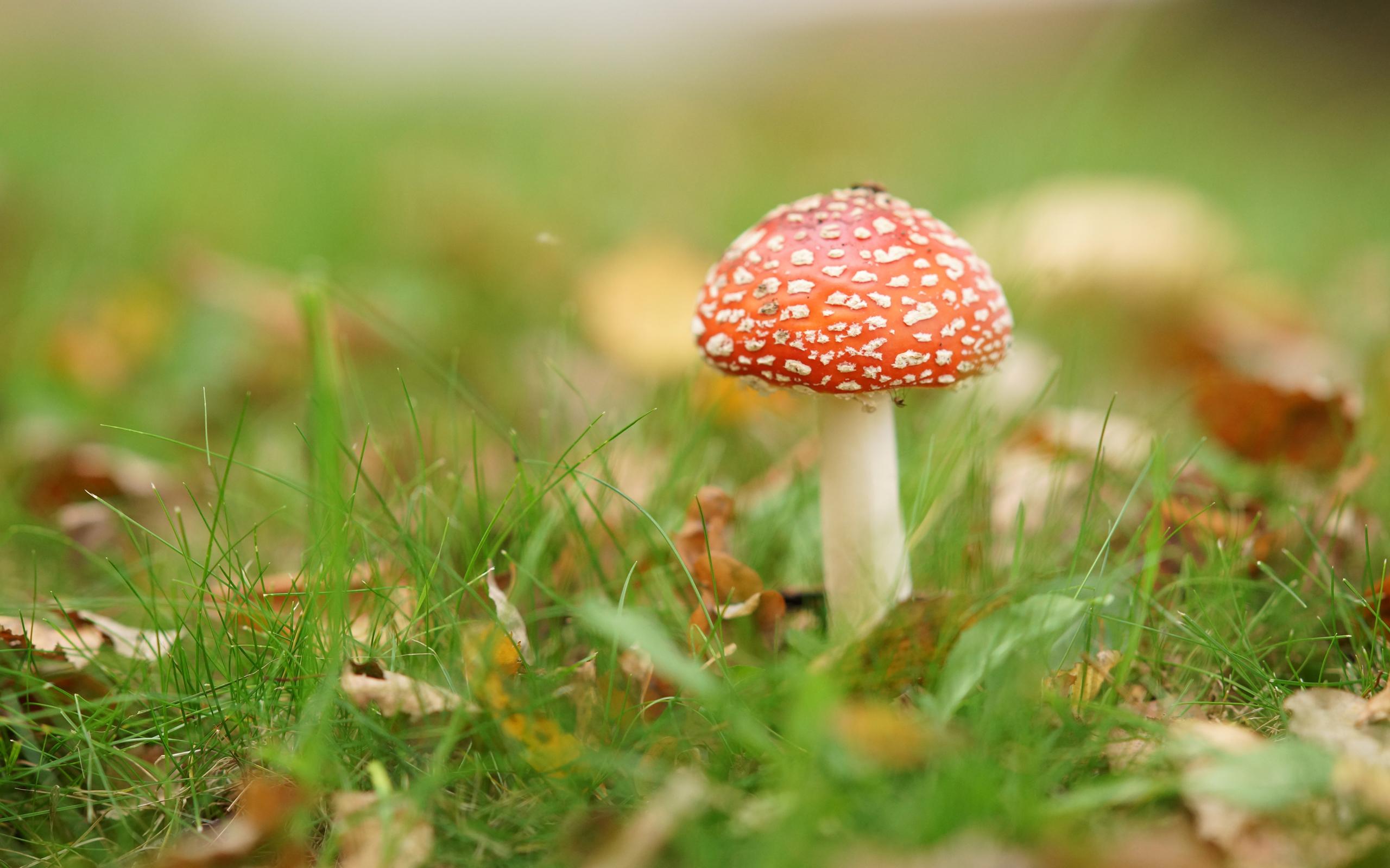 mushroom family wallpaper desktop - photo #9
