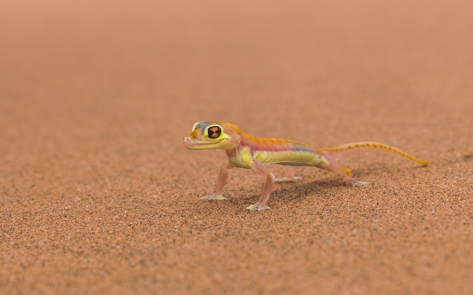 Lizard Full HD Wallpaper and Background 1920x1200 ID327242
