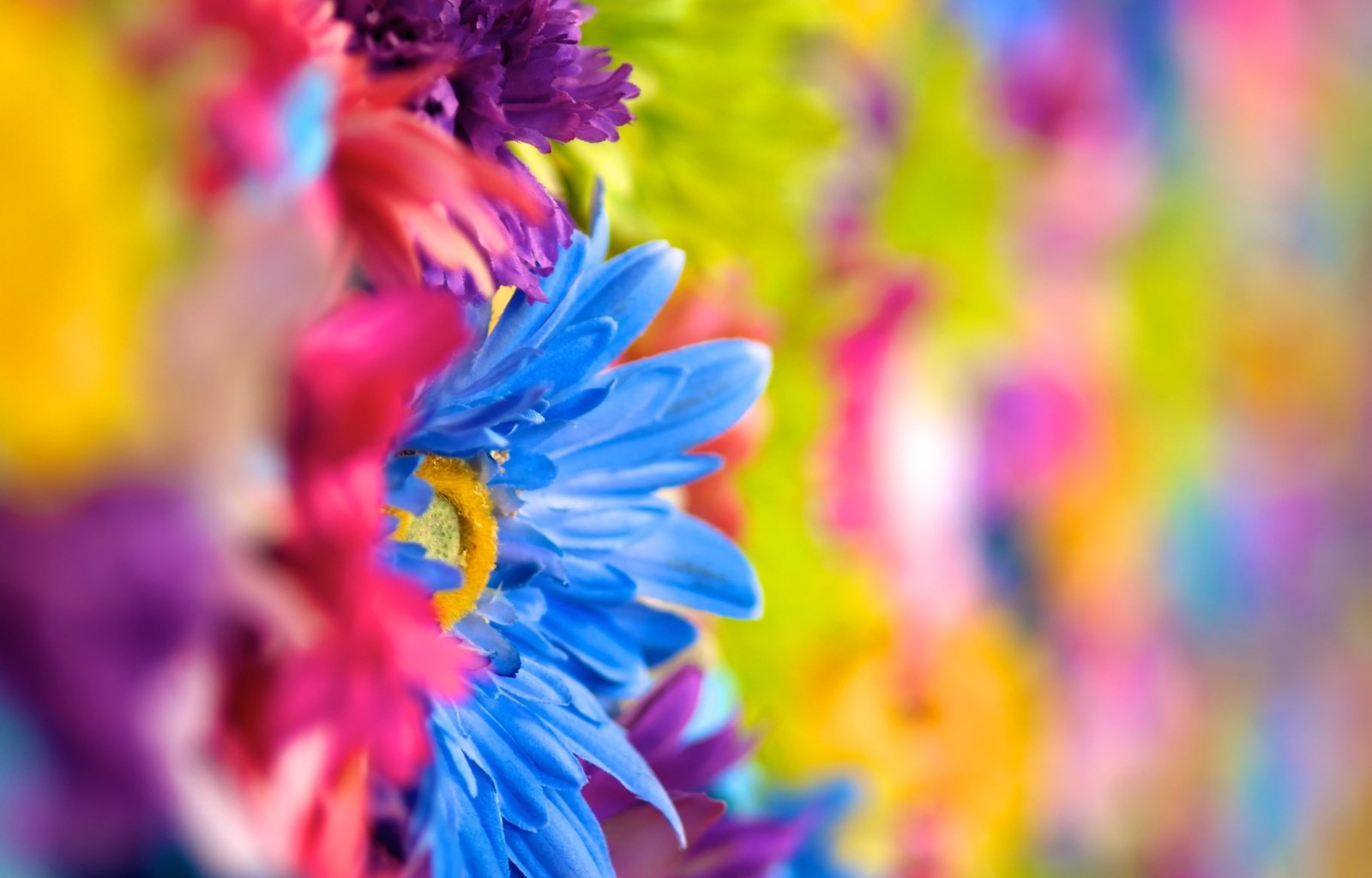 Flower wallpaper and background image 1600x1024 id - Wallpaper 1600x1024 ...