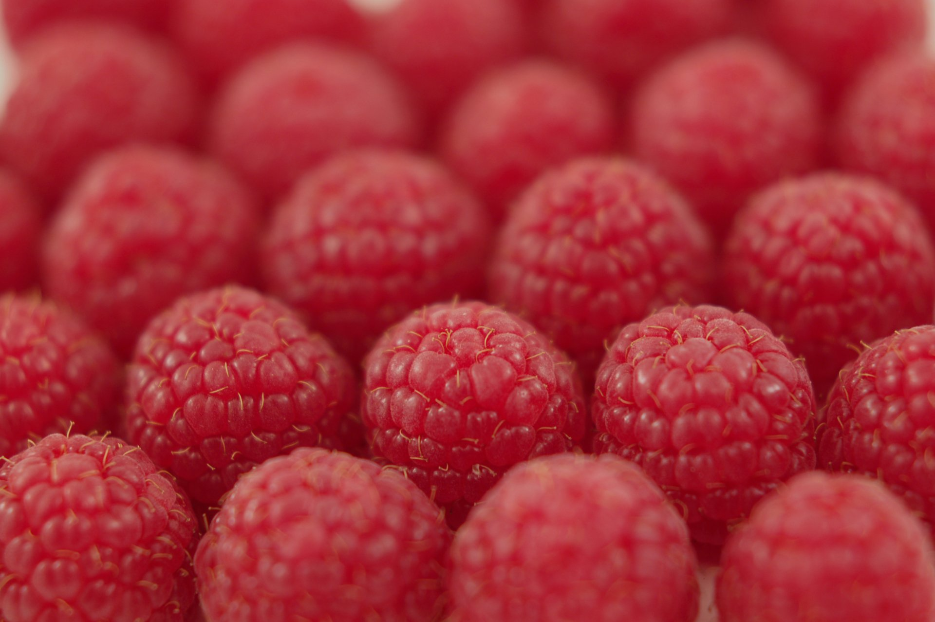 Food - Raspberry  Wallpaper