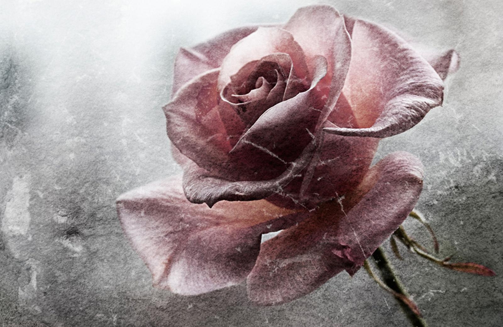 Фото разбитого цветка