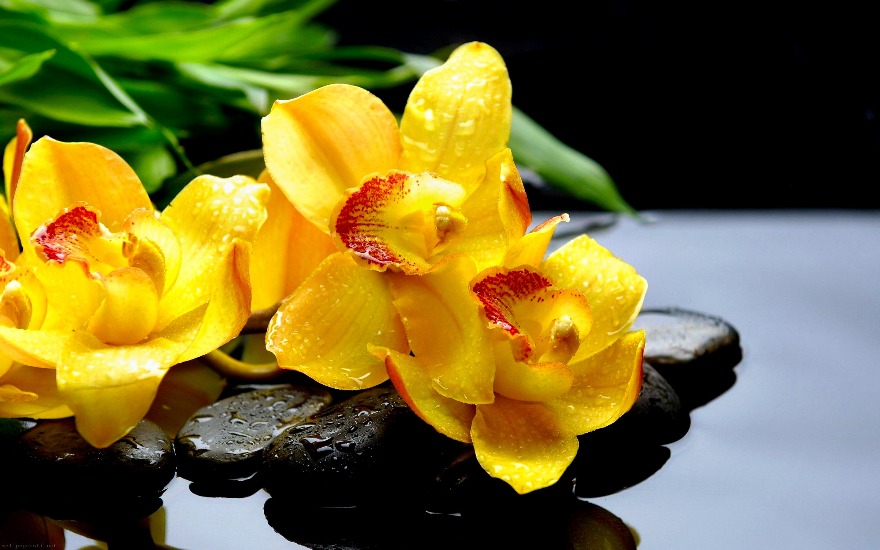 Wallpaper orchidee steine  FLOWER [14] orchids zenstyle [04december2012tuesday] [023711 ...