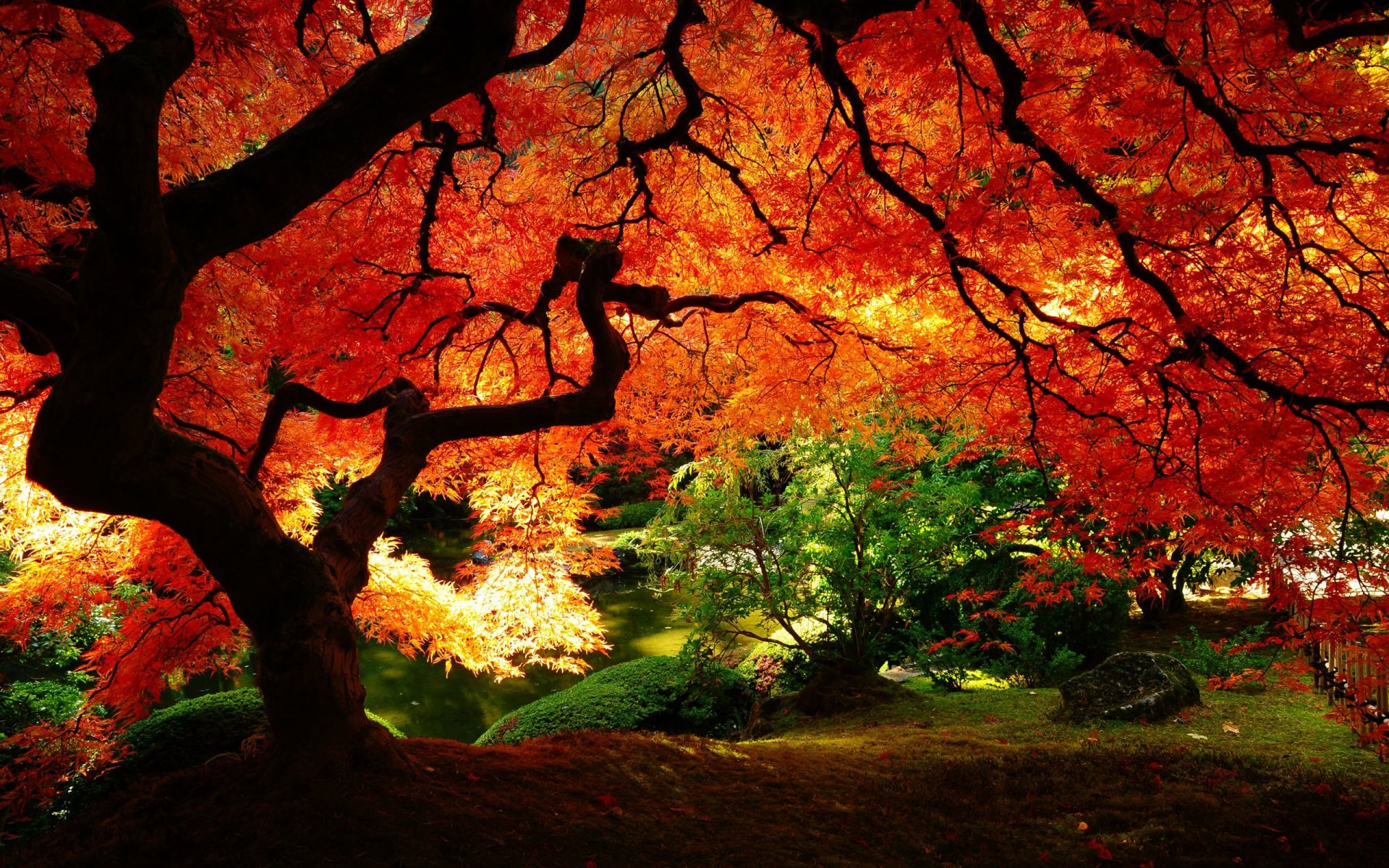 Earth - Tree  Park Colors Leaf Plant Fall Nature Garden Wallpaper