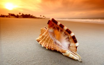 Earth - Shell Wallpapers and Backgrounds ID : 330110