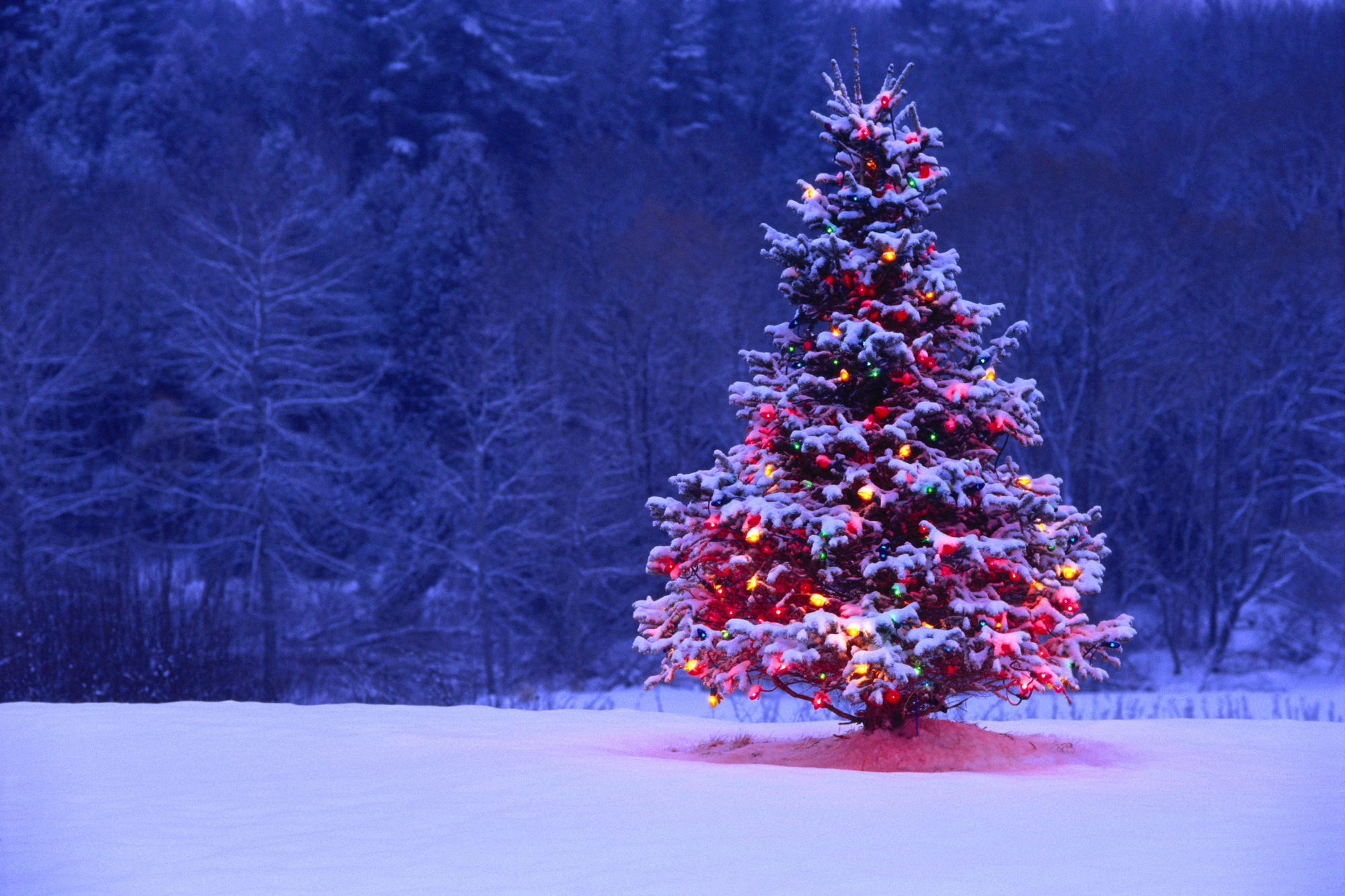 Weihnachten HD Wallpaper   Hintergrund   2000x1333   ID:337541 ...