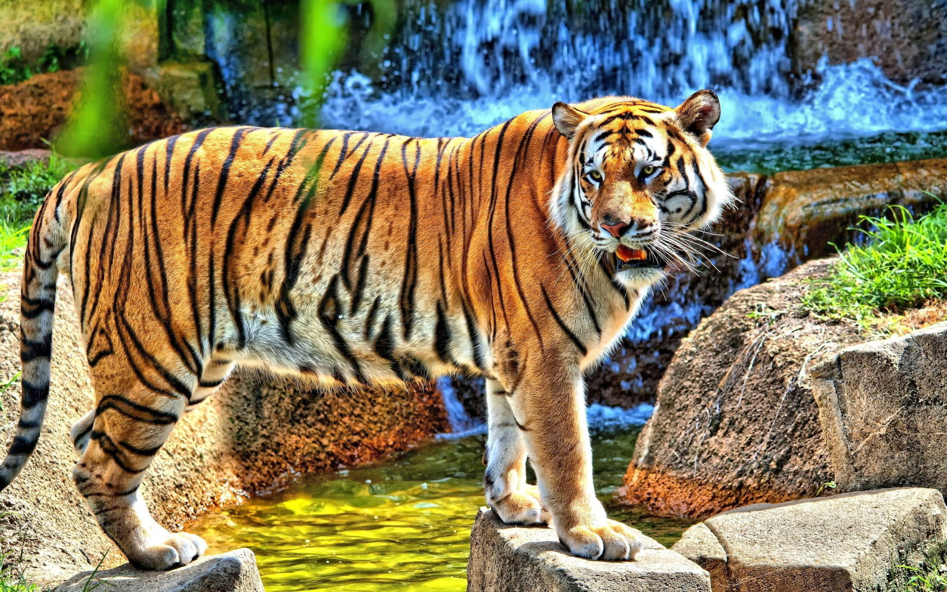 Tiger hd wallpaper background image 2560x1600 id 337331 wallpaper abyss - Tiger hd wallpaper for pc ...